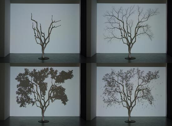 L'arbre et son ombre