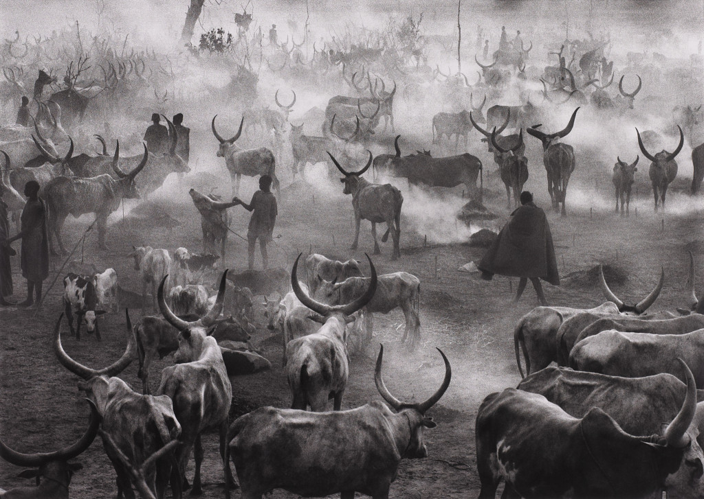 Dinka Cattle Camp of Amak, Southern Sudan