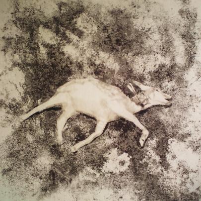 Wer hat Bambi Getötet